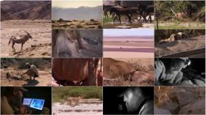 Planet Earth - Bonus Episode - Desert Lions 2011