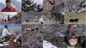 Planet Earth - Bonus Episode - Snow Leopards 2011