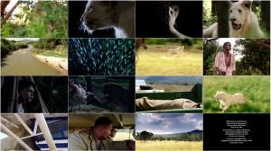 دانلود فیلم شیر سفید با دوبله فارسی White Lion 2010