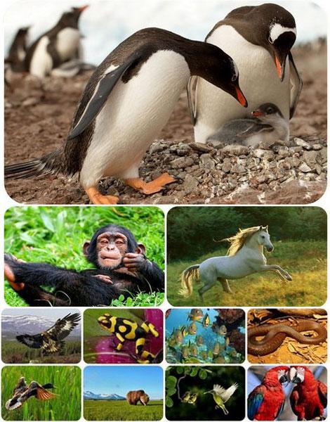 دانلود والپیپر حیوانات و طبیعت Animals & Nature Wallpapers
