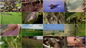 BBC Natures Microworlds Insect Specials E01 Them and Us