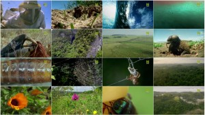 BBC Natures Microworlds Insect Specials E02 Making Worlds