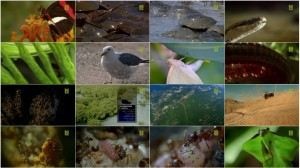BBC Natures Microworlds Insect Specials E03 The Secret to Their Success
