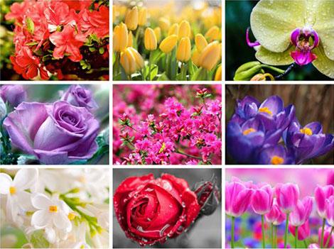 دانلود والپیپرهای گل Amazing Flowers HD Wallpapers