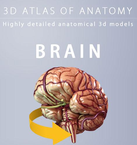دانلود نرم افزار آناتومی سه بعدی مغز Brain 3D Anatomy