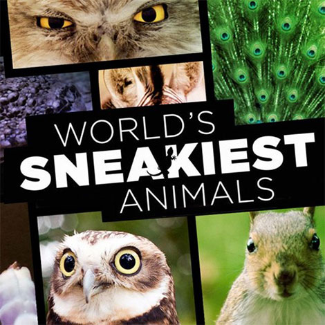 دانلود مستند World's Sneakiest Animals 2016