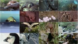 National Geographic - World's Weirdest: Animal Taboos Meet The Parents 2015