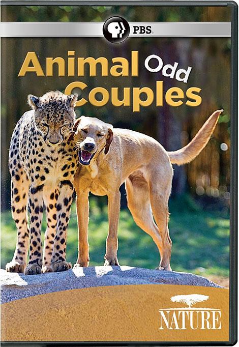 دانلود مستند PBS - Nature: Animal Odd Couples 2012