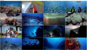 دانلود مستند Coral Reef Adventure 2003