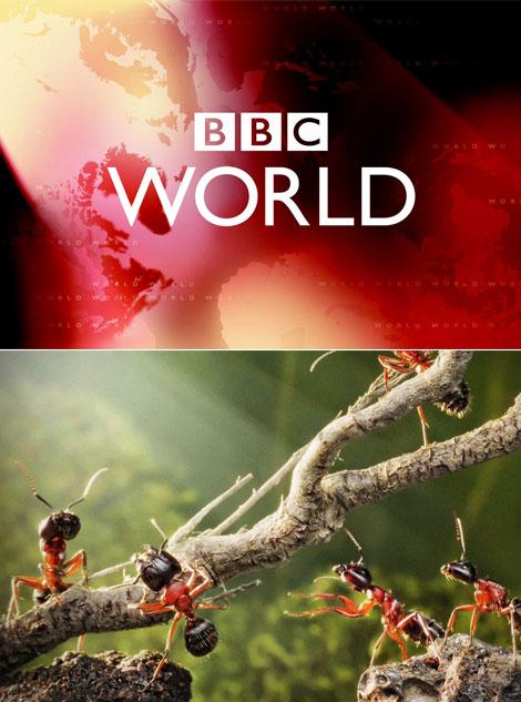 دانلود مستند حمله مورچه BBC Natural World: Ant Attack 2006