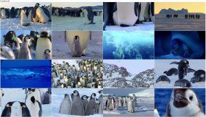 Snow Chick: A Penguins Tale 2015
