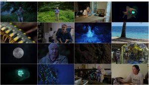 دانلود مستند Attenborough's Life That Glows 2016