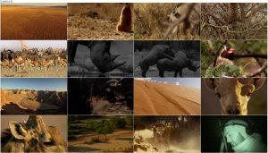 BBC Africa 2013 E01 Kalahari