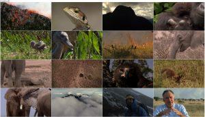 BBC Africa 2013 E02 Savana