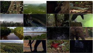 BBC Africa 2013 E03 Congo