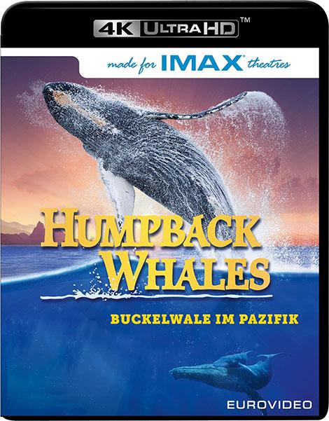 دانلود مستند نهنگهای کوهاندار Humpback Whales 2015