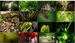 دانلود قسمت اول مستند Kingdom of Plants 2012 3D
