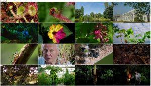 دانلود قسمت دوم مستند Kingdom of Plants 2012 3D