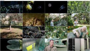 دانلود قسمت سوم مستند Kingdom of Plants 2012 3D