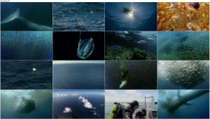دانلود مستند شکار قسمت چهارم Hunger at Sea