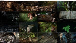 Hidden Kingdoms 2014 E02 Secret Forests