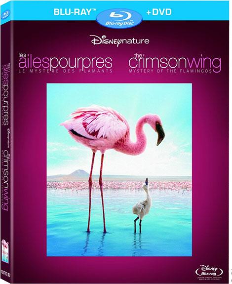 دانلود مستند اسرار فلامینگوها Mystery of the Flamingos 2008