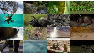 BBC: Planet Earth II 2016 - A World of Wonder