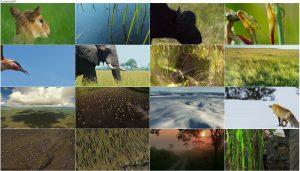 دانلود قسمت پنجم فصل دوم مستند سیاره زمین Planet Earth 2 2016 S02-E05