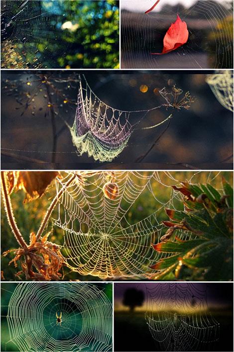 دانلود والپیپر تار عنکبوت Spider Web Wallpaper